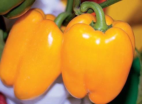 Лучшие сорта желтого перца