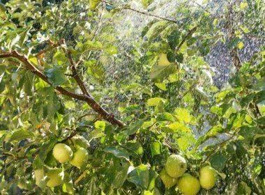 Выращивание вишни: делаем с удовольствием несложную работу