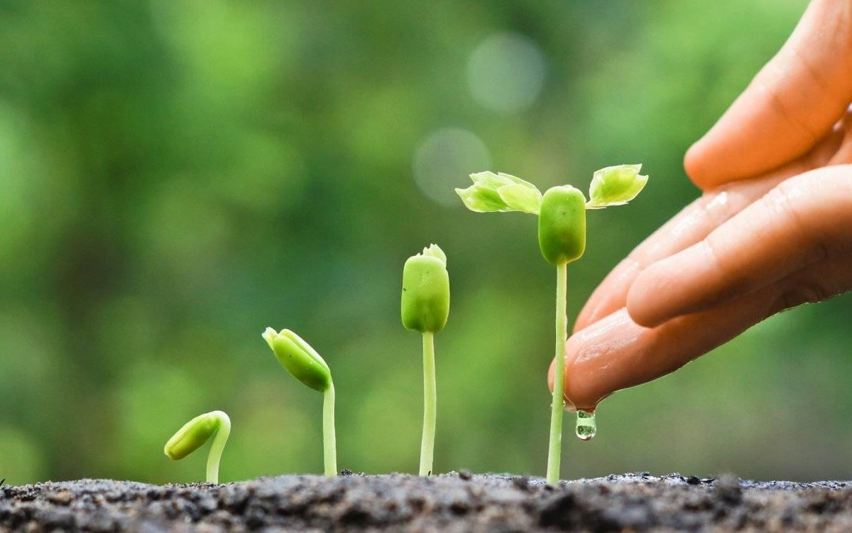 Хелатные удобрения: что это такое, форма удобрения, хелат железа, цинка и кальция, способы применения и свойства