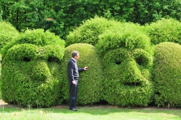 Как посадить тую для живой изгороди на даче. как посадить живую изгородь из туи