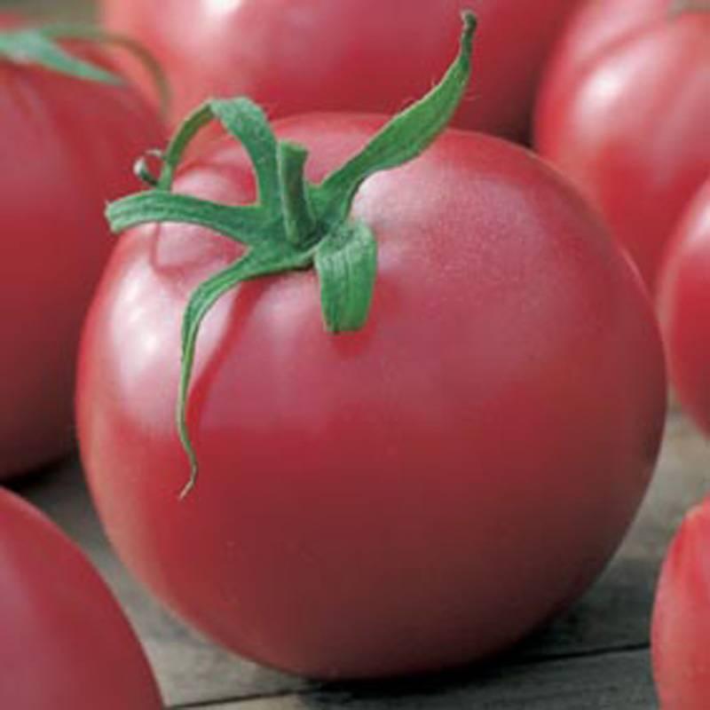 Характеристика томата «малиновый звон»: описание сорта, отзывы, фото