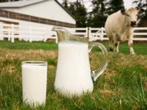 Когда можно пить молоко после отёла коровы