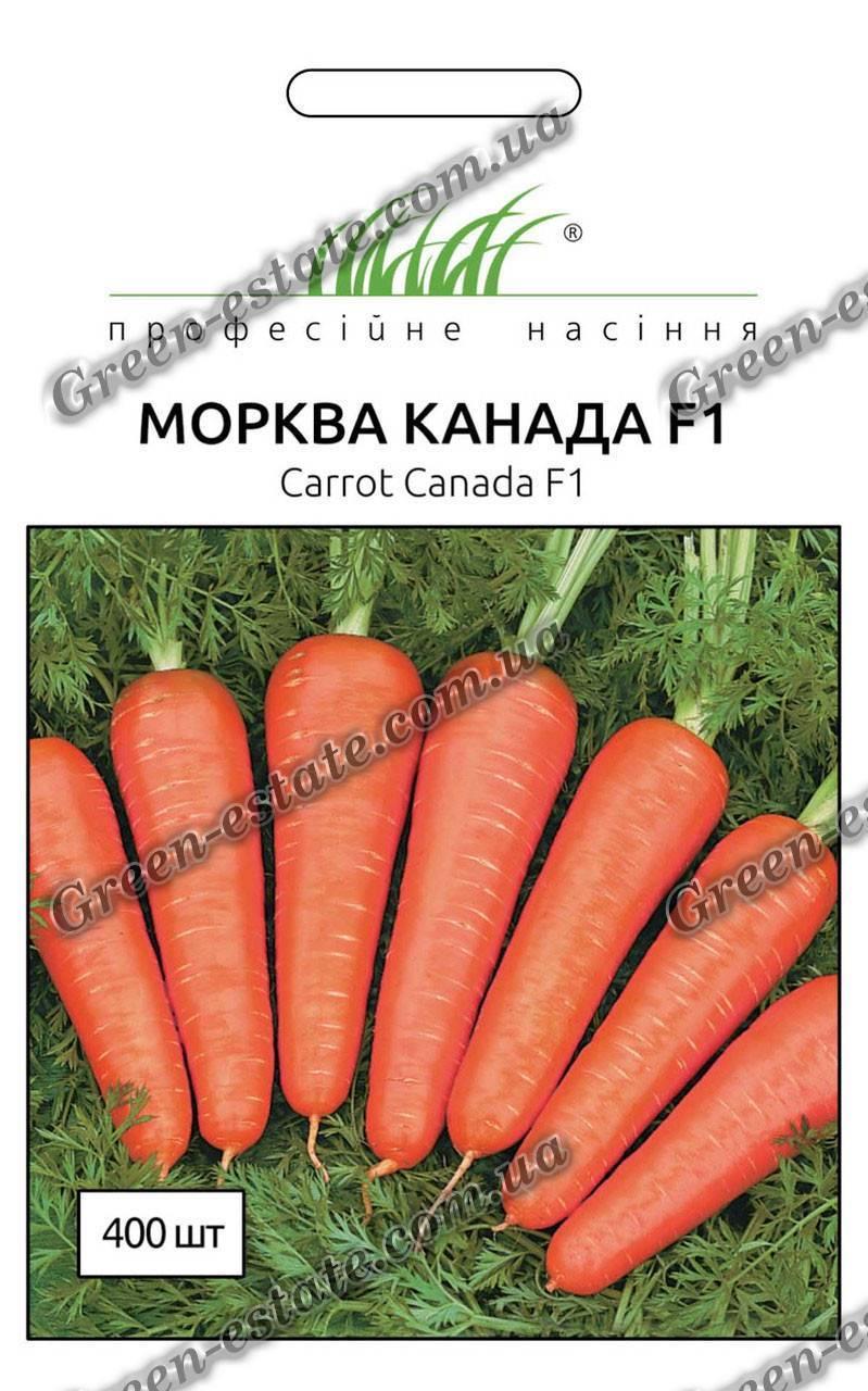 Морковь канада f1: среднепоздний голландский сорт