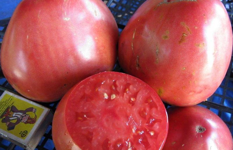 """Томат """"тяжеловес сибири"""": описание сорта и фото, рекомендации по уходу"""