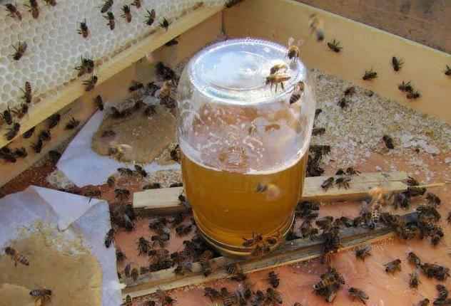 Подкормка пчел зимой: сиропом и медом в пакетах, канди, видео