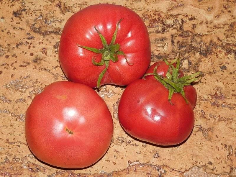 Помидоры алтайский мед: как разобраться с двумя сортами и посадить подходящий томат
