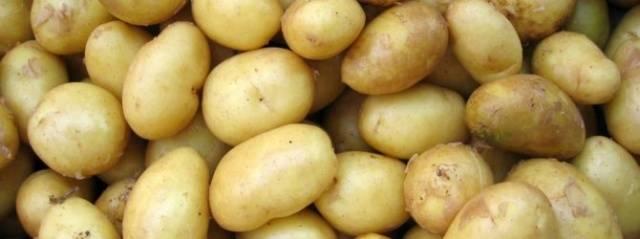 Описание картофеля сорта «киви» — как поднять урожайность