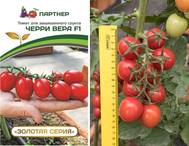 Помидоры «катя»: характеристика, особенности выращивания
