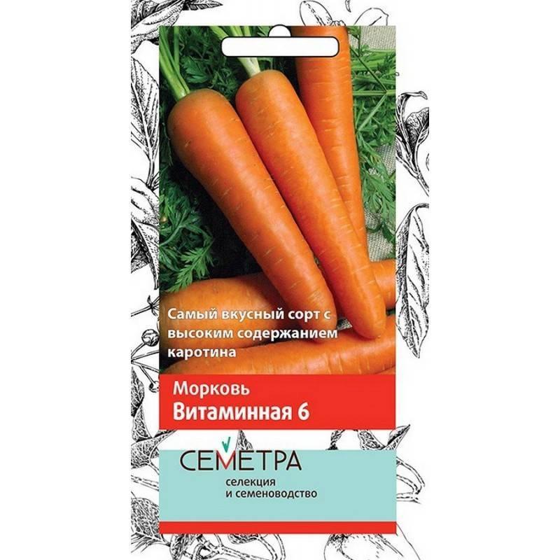 Сорт моркови витаминная 6