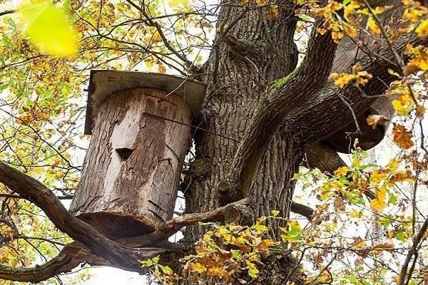 Wikizero - бортевое пчеловодство