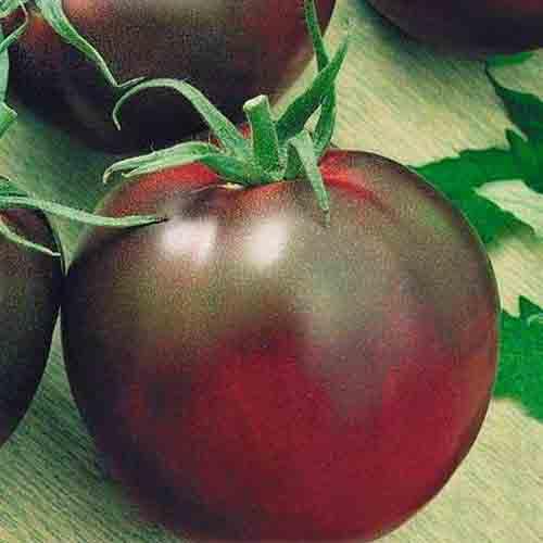 Томат чёрный барон: мощный куст с крупными шоколадными плодами