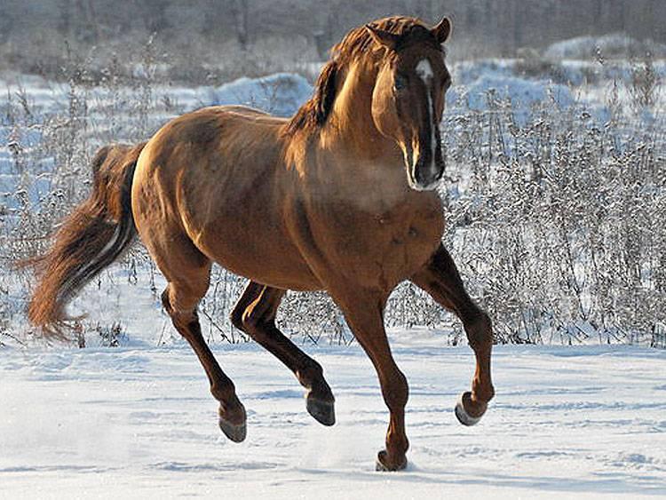 Аборигенные лошадки: лучшие местные породы