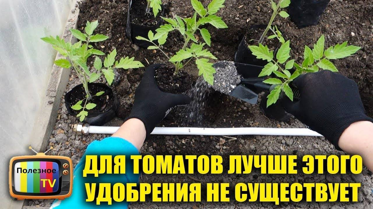 Подкормка при посадке помидор