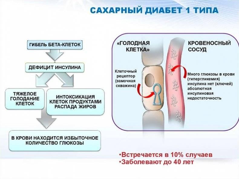 Можно ли есть белокочанную капусту при диабете 2 типа
