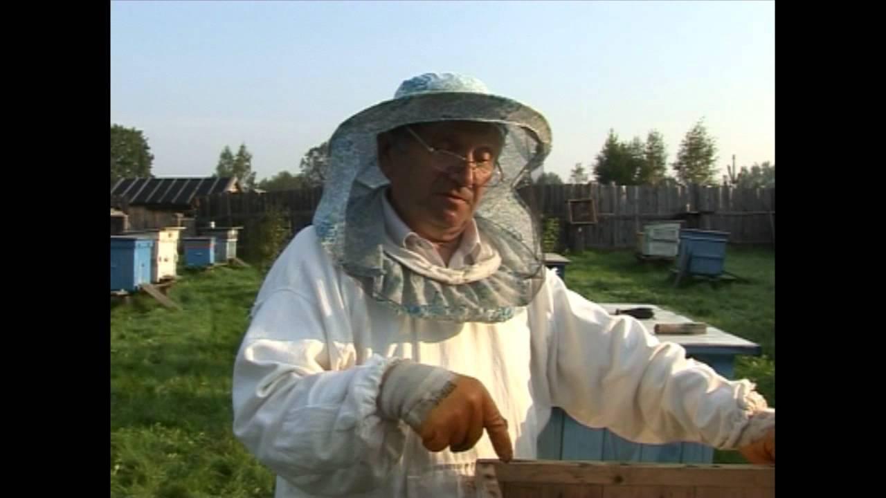 Как кормить пчел на зиму