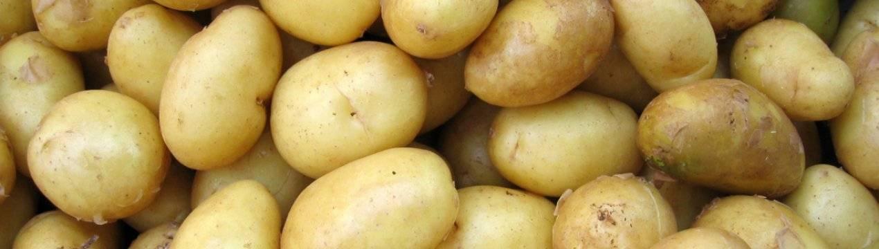 Картофель: технологии выращивания, сорта картофеля.