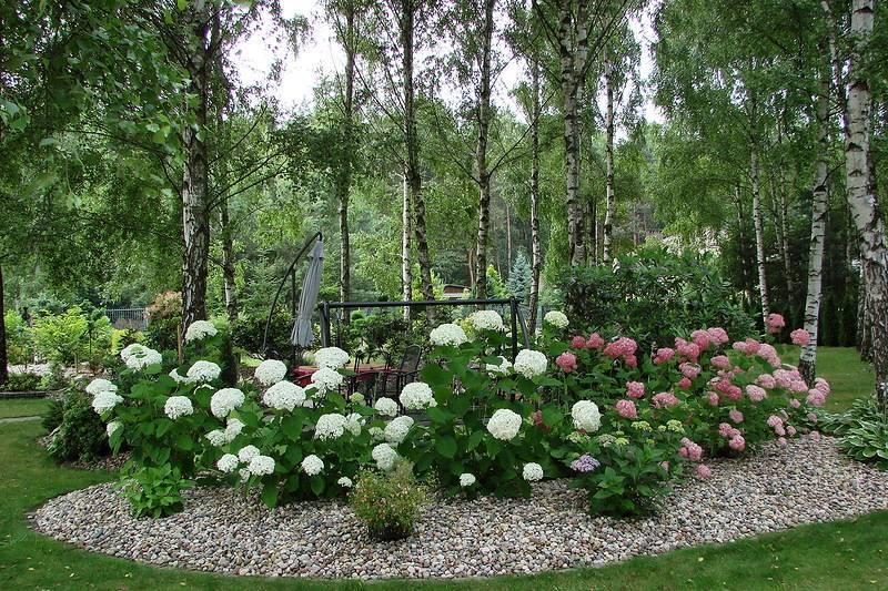 Ландшафтный дизайн: оформление участка цветами