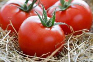 Штамбовые сорта томатов: особенности вида и 9 лучших сортов