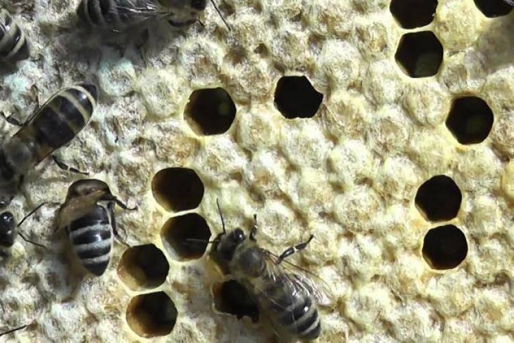 15 опасных болезней пчел их признаки и лечение