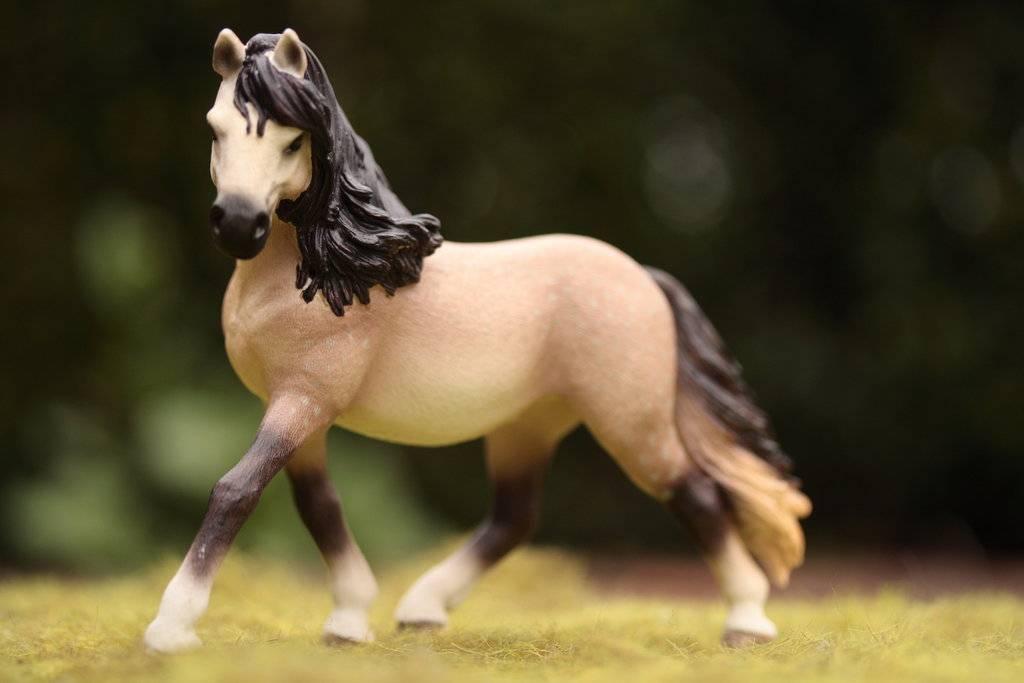 Порода лошадей – андалузская: история, описание, уход, содержание и цели разведения