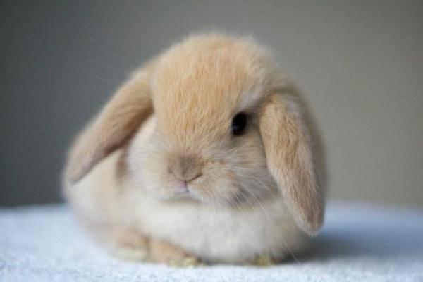 Что едят кролики и чем можно кормить