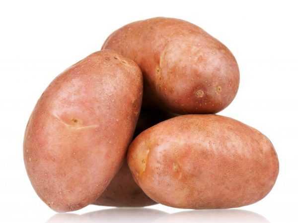 Особенности сорта картофеля лидер