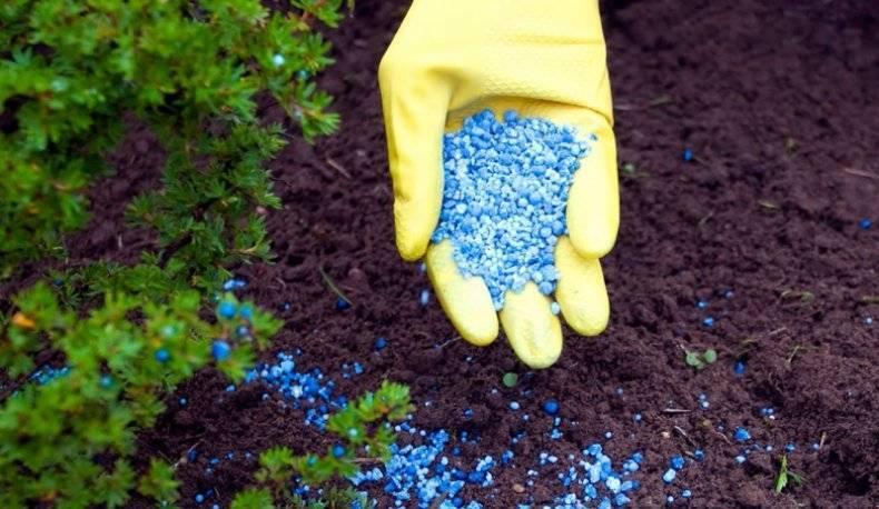 Применение сульфата калия на огороде и в саду