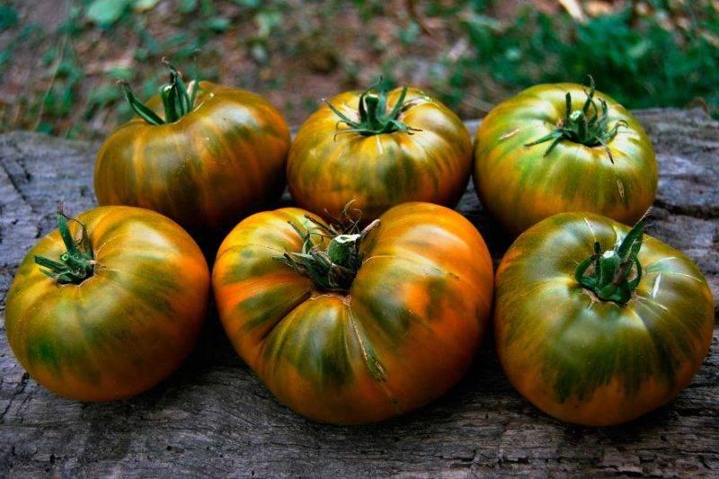 28 лучших сортов помидоров для открытого грунта