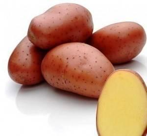Сорт картофеля ред скарлетт: описание, посадка и уход