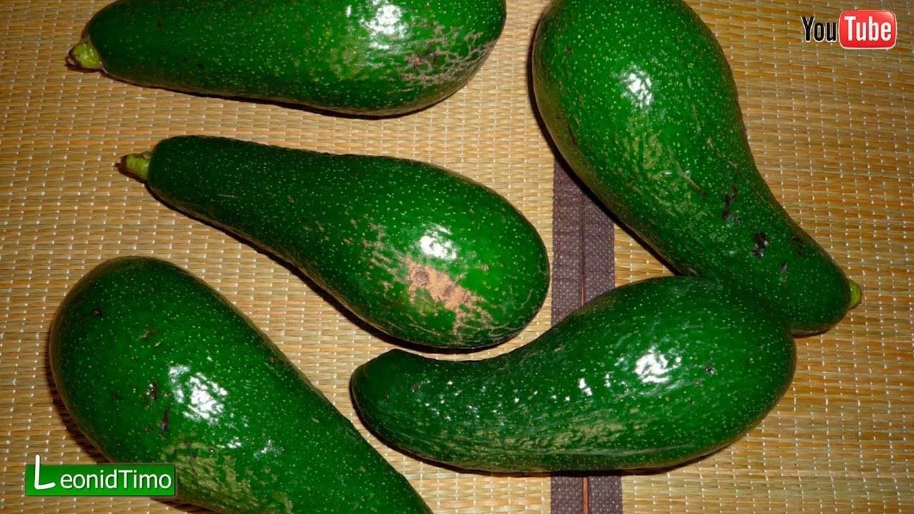 Как заставить быстро дозреть авокадо: 5 трюков