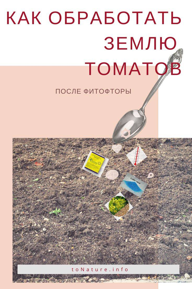 Чем опрыскать помидоры от фитофторы в теплице