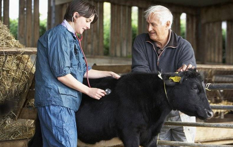 Хламидиоз крупного рогатого скота: симптомы и лечение