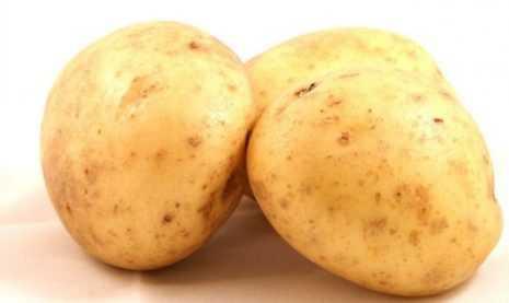 Сорт картофеля «молли»: характеристика, описание, урожайность, отзывы и фото
