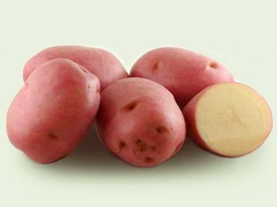 Характеристика российского картофеля «рябинушка»: описание сорта, фото