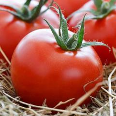 Томат санрайз — скороспелый сорт, плоды можно собирать через 65 дней