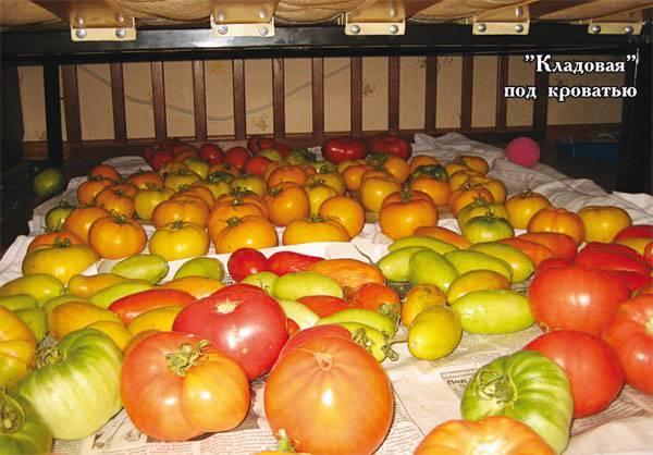 Лонг кипер томат. сорт томата лонг кипер