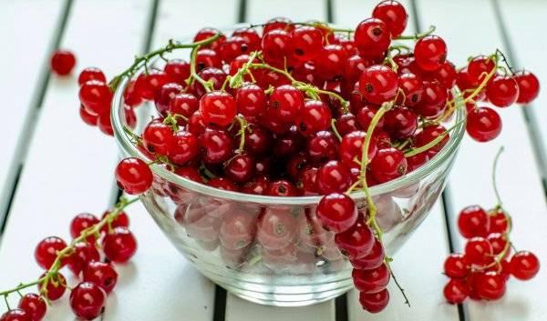 Красная смородина, полезные свойства ягод и листьев растения, противопоказания