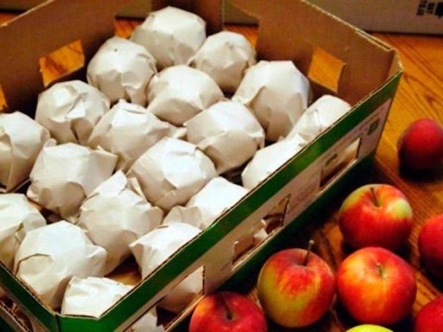 Как сохранить яблоки на зиму свежими: в домашних условиях, в погребе, как правильно это сделать вквартире, когда снимать плоды и как хранить в подвале и на балконе, в холодильнике