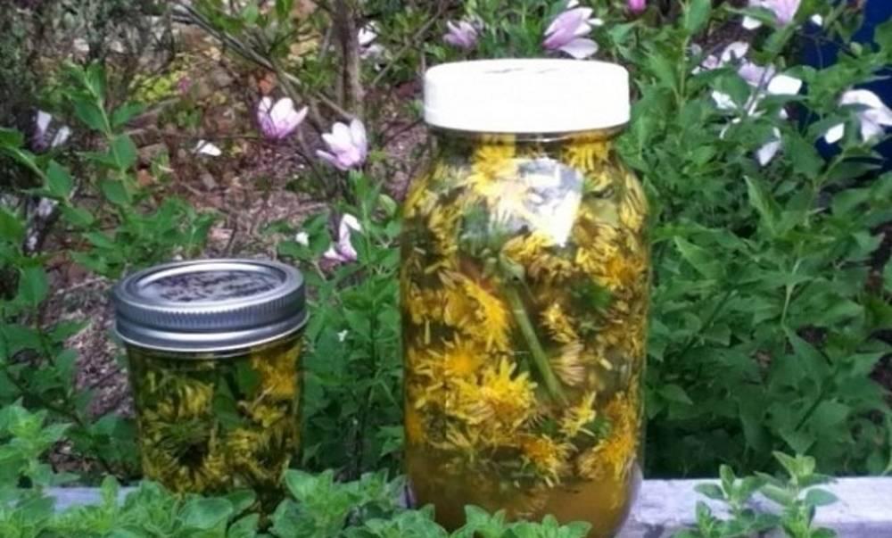 Цветы одуванчика на водке — от чего помогает настойка, как правильно применять