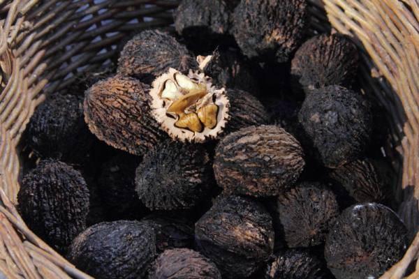 Черный орех: польза и вред