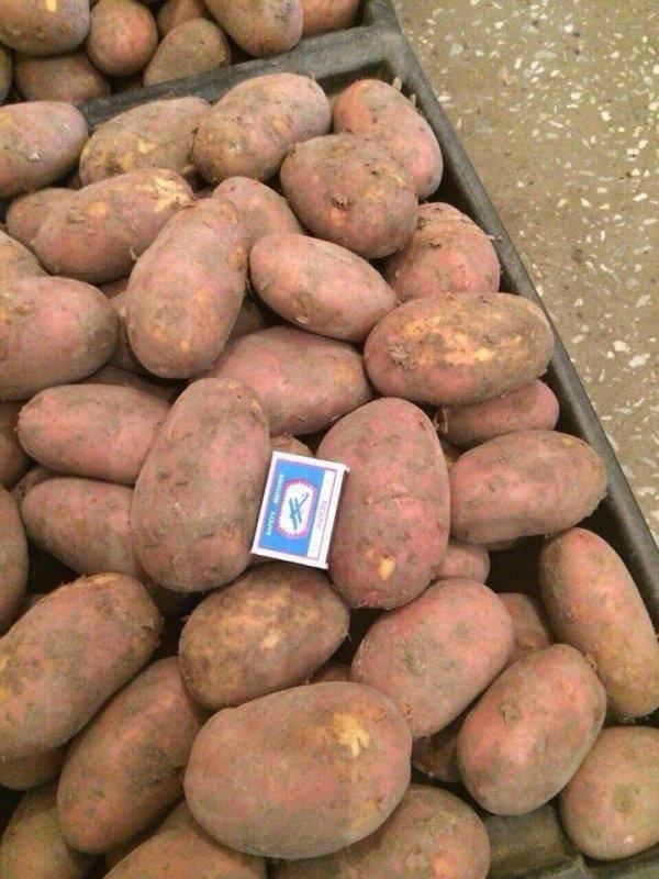 Сорт картофеля романо: описание и характеристика, отзывы
