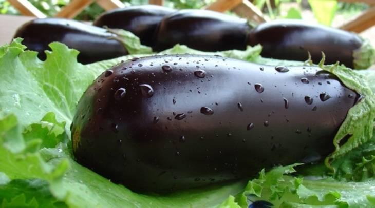 Баклажан щелкунчик f1 — описание сорта, отзывы, характеристика и урожайность