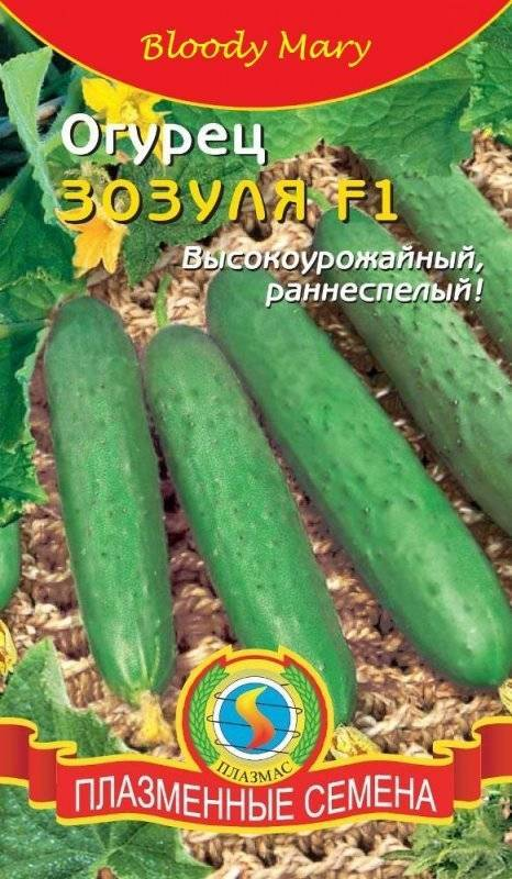 Сорт зозуля f1: любимый российский огурец-партенокарпик