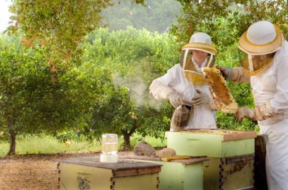 Бизнес пчеловодство: как начать, подробный разбор