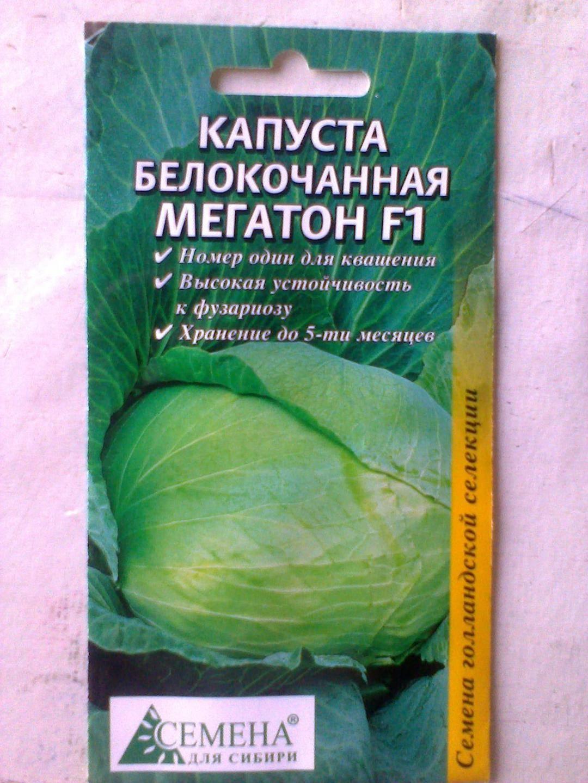 Сорт капусты мегатон f1