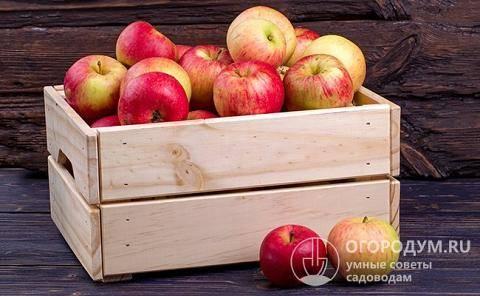 Как сохранить яблоки на зиму — методы опытных садоводов