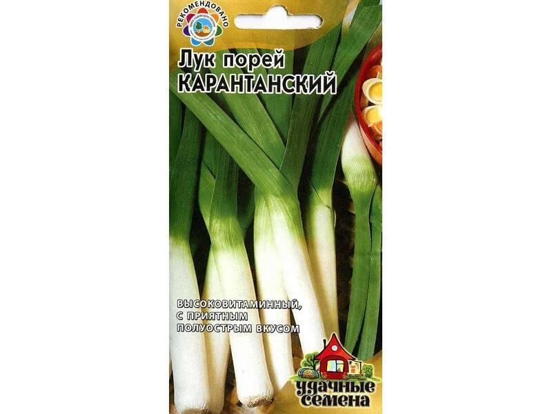 Особенности выращивания лука-порея и уход в домашних условиях