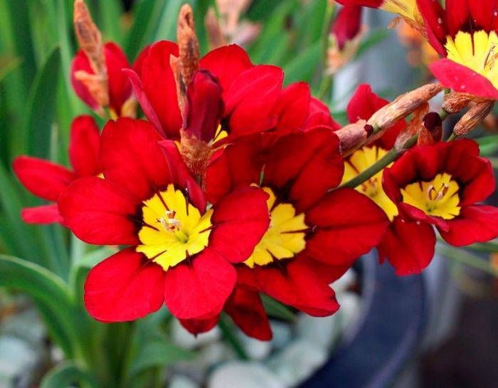 Цветы многолетники правила посадки