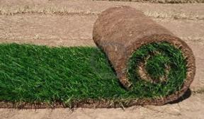 Укладка рулонного газона своими руками шаг за шагом. советы профессионалов. видео