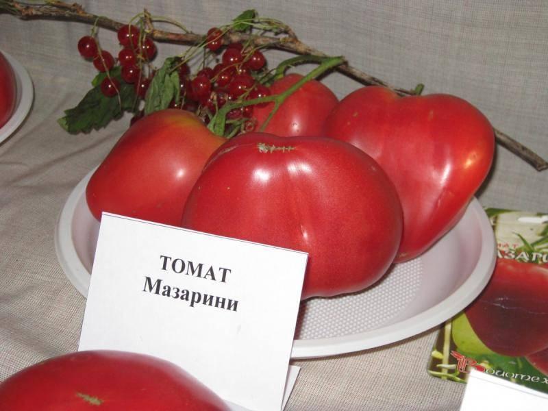 Томат мазарини f1 – описание сорта, достоинства и недостатки, особенности выращивания